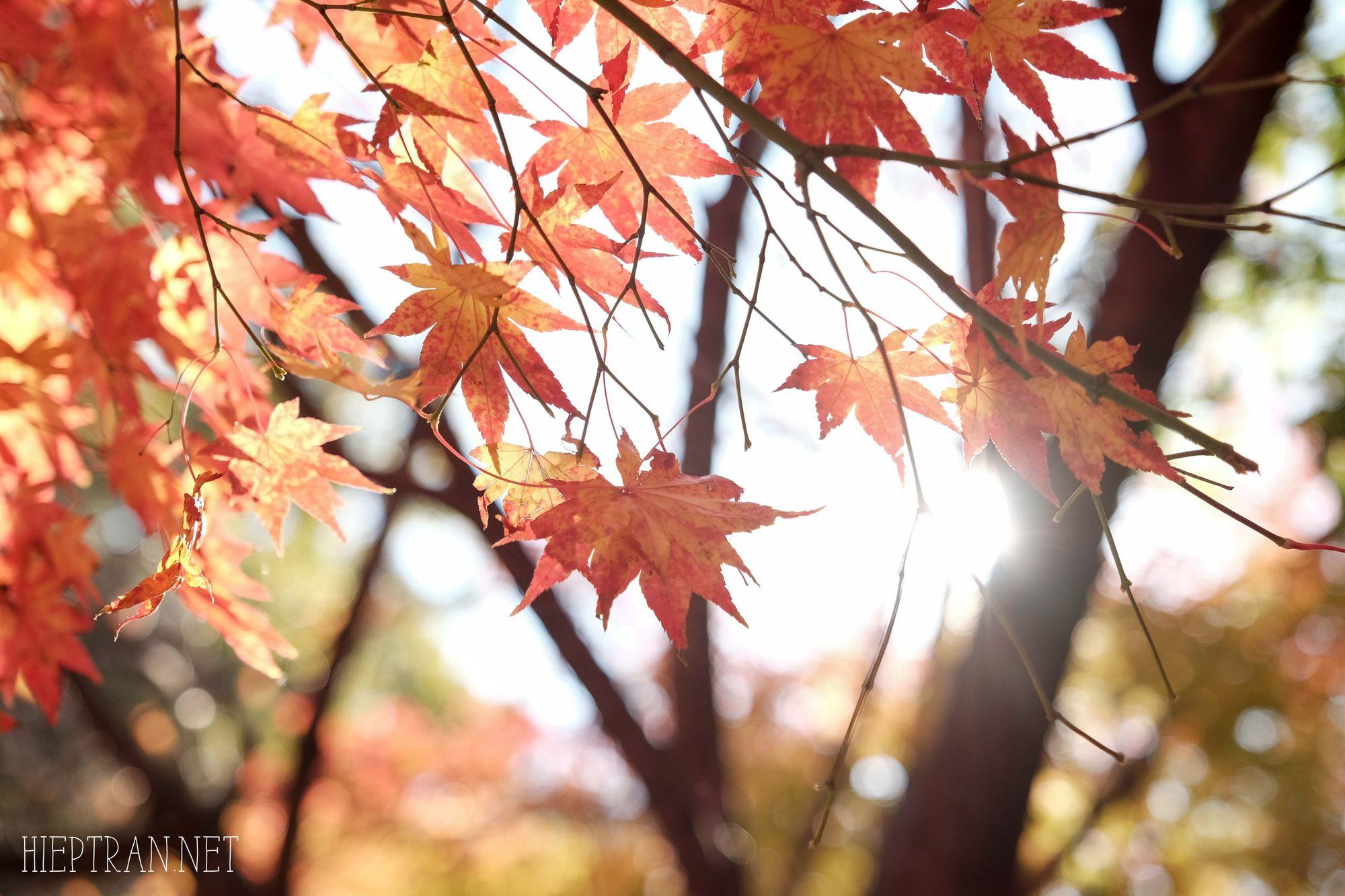 Mùa thu vàng Hàn Quốc ở công viên Naejangsan - Địa điểm ngắm mùa thu Hàn Quốc